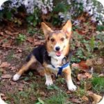 Good Work From The ASPCA  Missouri Puppy Mills Shut Down