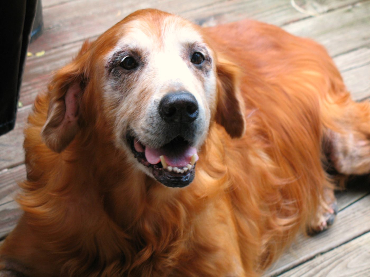 408b36c5f80ebca Symptoms In Dogs   Recognize What Your Dog Might Be Feeling